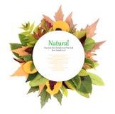 Höstplatta med leaves runt om den arkivfoton