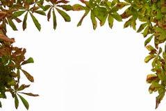 Höstram av leaves arkivfoton