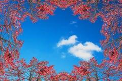 Höstram mot blå himmel Fotografering för Bildbyråer