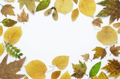 Höstram som göras av isolerade torra färgrika sidor på vit bakgrund, kopieringsutrymme Lekmanna- lägenhet, bästa sikt Royaltyfria Bilder