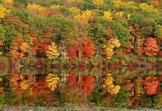 höstreflexionstree Arkivfoto