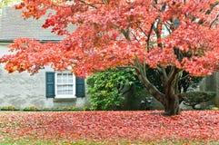 Höstsäsong - familjhus med den främre gården Royaltyfria Bilder