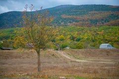 Höstsäsong i Ryssland det ensamma härliga trädet Landskap fotografering för bildbyråer