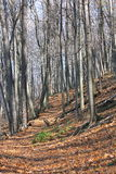 Hösts skogsbevuxna slinga Royaltyfria Bilder