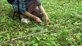 Höstsammankomsten av champinjoner i skogen, någon klipper champinjonen med kniven arkivfilmer