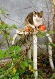 Höstsammansättning med en katt och äpplen royaltyfri foto