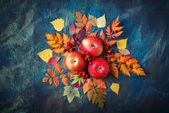 Höstsidor, äpplen och bär på en mörk bakgrund höstbakgrundscloseupen colors orange red för murgrönaleaf Arkivbild
