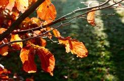 Höstsidor, filialer och spindelnät backlit av solen Arkivfoton