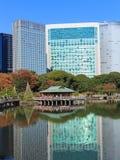 Höstsidor i Hamarikyu trädgårdar, Tokyo Arkivbilder