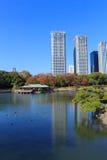 Höstsidor i Hamarikyu trädgårdar, Tokyo Royaltyfria Bilder