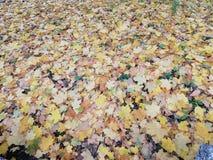 Höstsidor i många färger täcker jordningen arkivbild