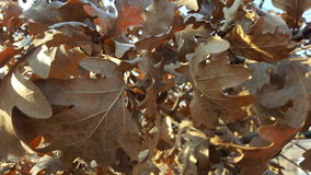 Höstsidor i trädet Fotografering för Bildbyråer