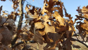 Höstsidor i trädet Arkivfoton