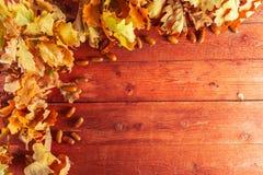Höstsidor och ekollonar på lantlig träbakgrund Nedgångbakgrund med kopieringsutrymme fotografering för bildbyråer