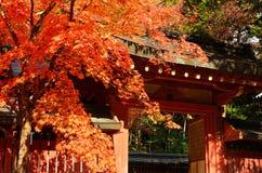 Höstsidor och relikskrin, Japan royaltyfri bild