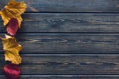 Höstsidor på blå träbakgrund Arkivfoton