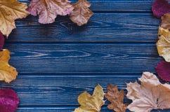 Höstsidor på blå träbakgrund Arkivbild