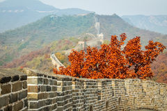 Höstsidor på den gamla stora väggen av Kina Royaltyfria Foton