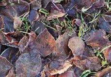 Höstsidor på det djupfrysta gräset arkivbilder