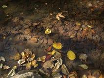 Höstsidor på en klar vattenliten vik Arkivbild