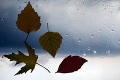 Höstsidor på ett vått fönster på en bakgrund av regnigt väder Arkivfoto