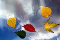 Höstsidor på ett vått fönster på en bakgrund av regnigt väder Arkivbilder