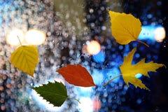 Höstsidor på ett vått fönster på en bakgrund av regnigt väder Arkivfoton
