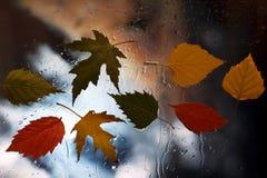 Höstsidor på ett vått fönster på en bakgrund av regnigt väder Royaltyfri Foto