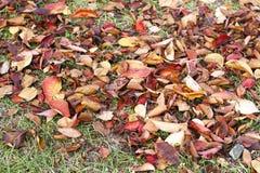 Höstsidor på gräset, höstbakgrund arkivfoto