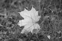 Höstsidor på gras arkivfoton