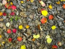 Höstsidor på jorden fallna leaves Arkivfoto
