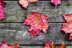 Höstsidor på lantlig träbakgrund Royaltyfri Fotografi
