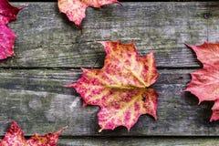 Höstsidor på lantlig träbakgrund Royaltyfri Bild