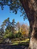 Höstsidor på skoggolvet i solljus Höst royaltyfri fotografi