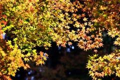 Höstsidor på solskenbakgrund royaltyfri foto