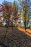 Höstsidor på träden och jordningen fotografering för bildbyråer