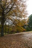 Höstsidor på trädet och på jordningen arkivfoton