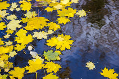 Höstsidor på vattnet Royaltyfria Bilder