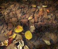 Höstsidor som är solbelysta på en klar vattenliten vik Fotografering för Bildbyråer