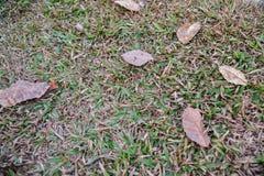 Höstsidor som är stupade på gräs Royaltyfri Foto