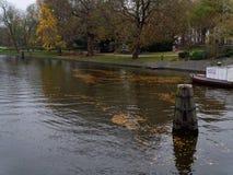Höstsidor som driver i kanal-vattnet nära, parkerar, den Amsterdam staden royaltyfri bild