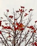 Höstsidor som ser som röda fåglar som flyger i himmel Fotografering för Bildbyråer