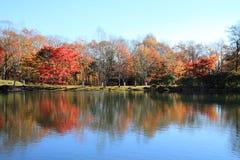 Höstsidor vid sjön i den Kiyosato höglandet Royaltyfri Foto