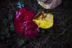 Höstsidor vilar på jordning efter nederbörd royaltyfria foton