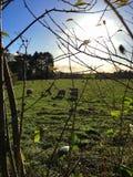 Höstsikt över fält med får i sydliga England Arkivbild