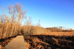 Höstsikt av älgönationalparken på solnedgången Fotografering för Bildbyråer