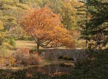 Höstsikt av träd över bron Royaltyfria Bilder
