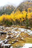 Höstsikterna av Bipengou i Sichuan Royaltyfri Fotografi