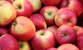 Höstskörd Apple arkivbilder