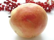 Höstskörd av frukter och bär Päron`-bera ` mot bakgrunden av viburnumen arkivfoto
